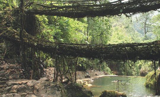 Living-Bridges-Of-India