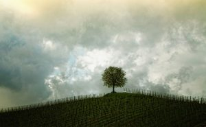 8-Ways-to-save-a-tree