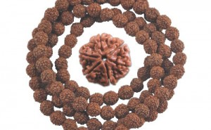 Research-Proves-Biomedical-Effects-Of-Rudraksha