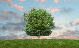 language of tree